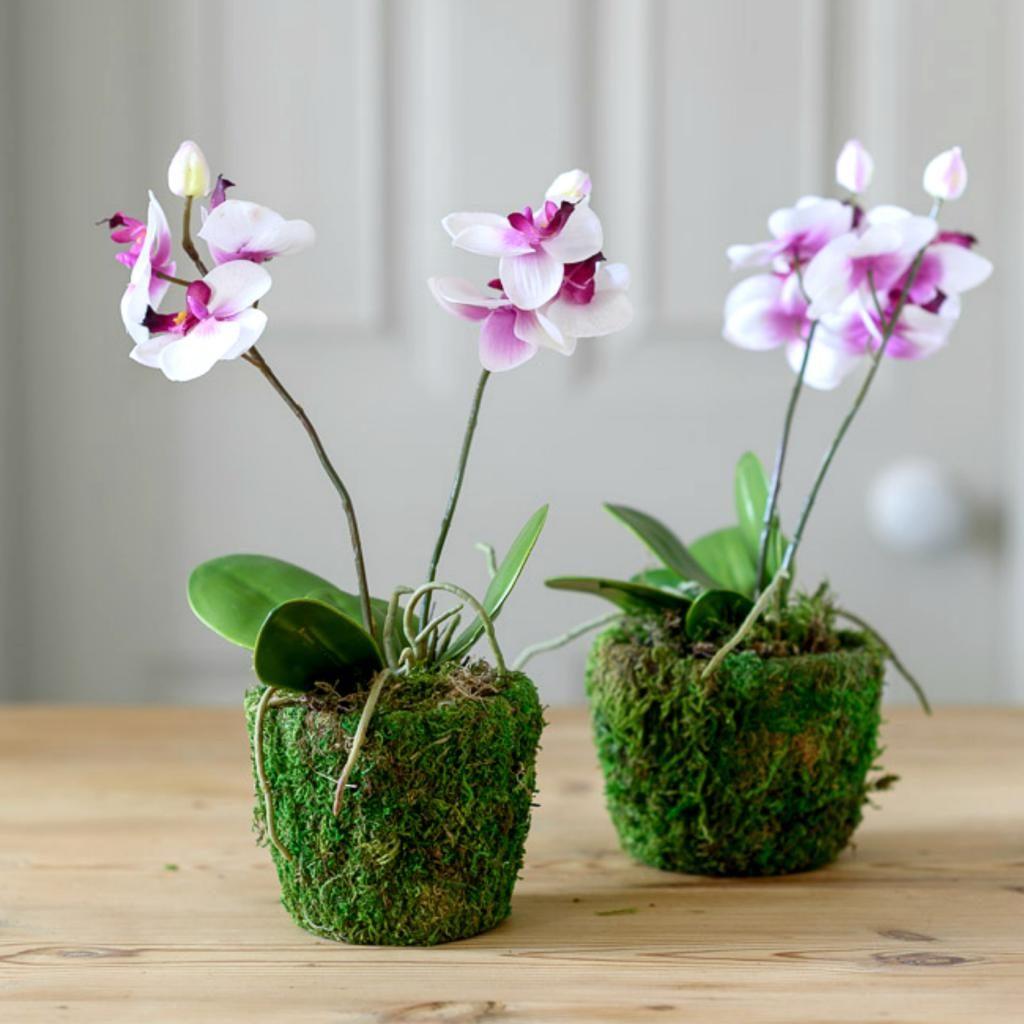 Освещение для цветения орхидеи