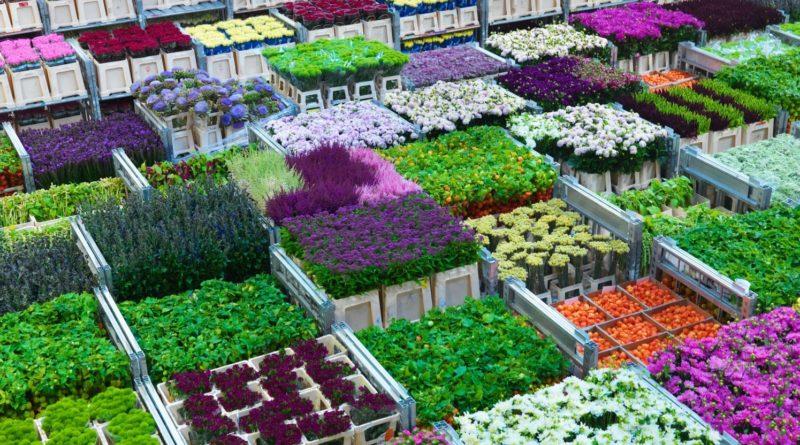 Живые цветы оптом: как сделать выбор